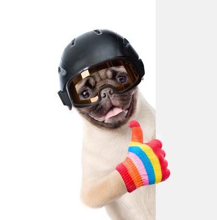 mountain peek: Puppy in helmet showing thumbs up and peeking from behind empty board. isolated on white background.