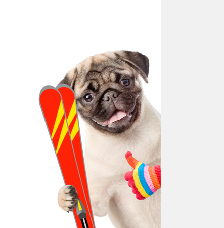 mountain peek: Puppy with skiing showing thumbs up. isolated on white background. Stock Photo