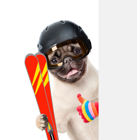 mountain peek: Puppy in helmet holding skis, peeking from behind empty board and showing thumbs up. isolated on white background.
