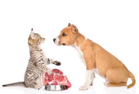 고양이는 강아지의 음식을 보호합니다. 흰색 배경에 고립.