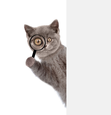 Funny cat looks thru a magnifying lens. Isolated on white background.