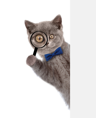 Smart cat with tie bow looks thru a magnifying lens. Isolated on white background.