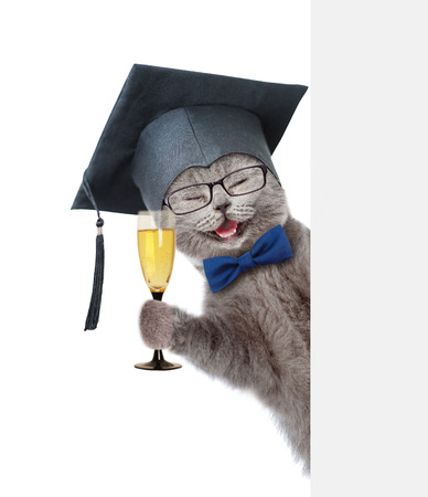 meow: Happy graduated cat holding glass of champagne and peeking from behind empty board. isolated on white background.