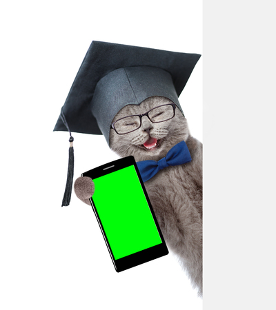 Happy graduated cat with smartphone peeking from behind empty board. Isolated on white background. Stock Photo