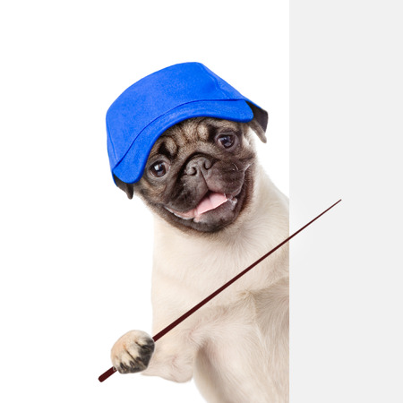 laborer: Dog in hat laborer holding a pointing stick and points on empty white banner. isolated on white background.