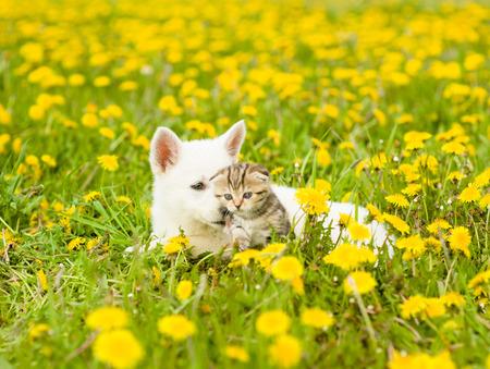 perros graciosos: Cachorro y gatito acostado en un campo de flores. Foto de archivo