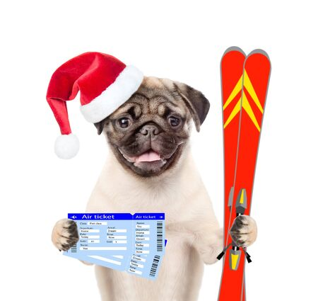 christmas hats: Puppy in red christmas hats with tickets and skiing. isolated on white background.