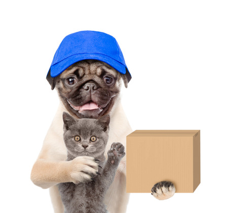 Funny dog with cat delivering a big package. isolated on white background.
