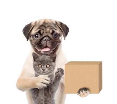 Funny dog in hat laborer with cat delivering a big package. isolated on white background.