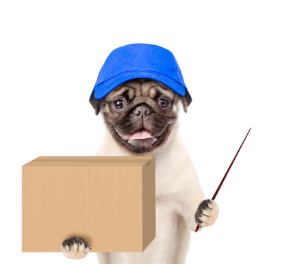 Dog in hat laborer holding a pointing stick and big package. isolated on white background. Stock Photo