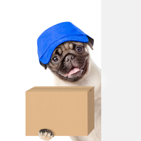mail: Dog with a cardboard box in his paws above white banner. isolated on white background.