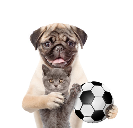 soccer team: Cat and dog with soccer ball standing together. Isolated on white background.