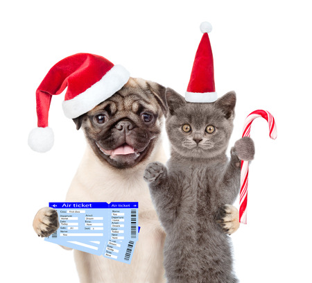 Puppy and kitten in red christmas hats with tickets. isolated on white background.