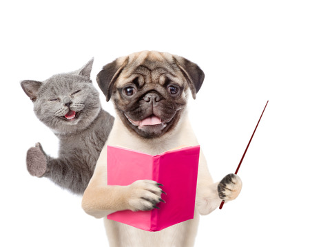 Funny cat and smart dog wirth book. isolated on white background. Stock Photo