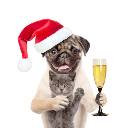 Kitten and puppy in red santa hat with a glass of champagne. isolated on white background.