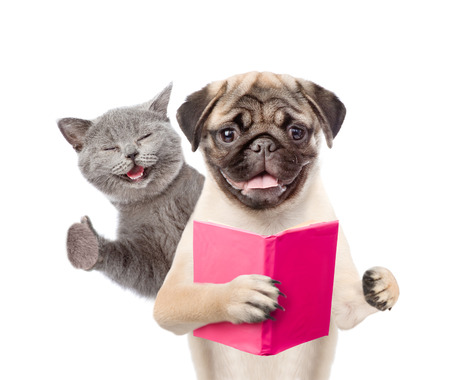 dog school: Funny cat and smart puppy with book. isolated on white background. Stock Photo