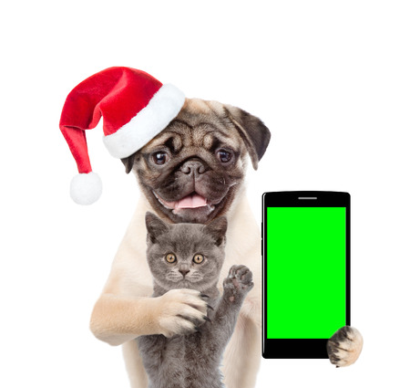 Cat and dog in red christmas hat with smartphone. Isolated on white background.
