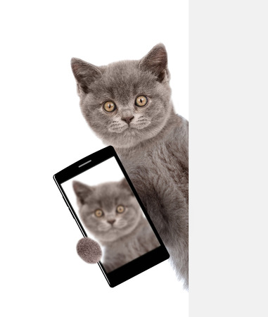 Cat with smartphone peeking above white banner and taking a selfie. Isolated on white background.