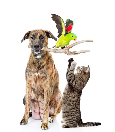 studio zoo: ?at playing with a bird on a stick that keeps the dog. isolated on white background.
