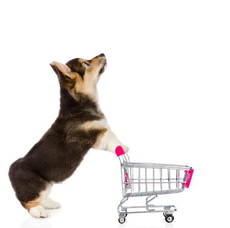 ショッピングトロリー見上げるとペンブローク ウェルシュ コーギー子犬。白い背景上に分離。