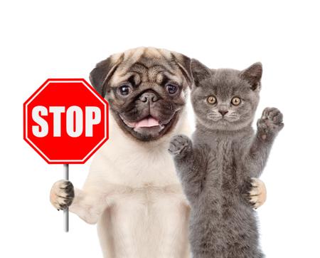 「一時停止」の標識と犬と猫。白い背景上に分離。