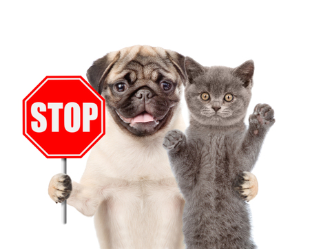 Cat and dog with the