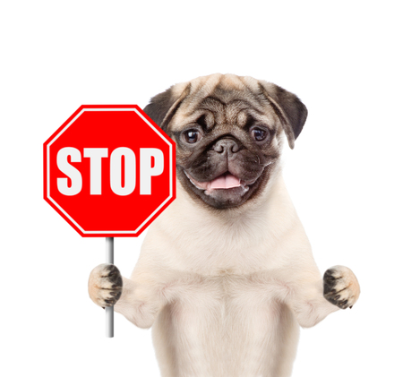 Dog holding stop sign. Isolated on white background. Stok Fotoğraf