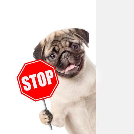 """Perro mirando con la señal """"stop"""". Aislados en fondo blanco."""