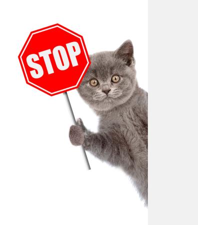 """Katze späht mit dem """"Stopp"""" -Schild. Getrennt auf weißem Hintergrund."""