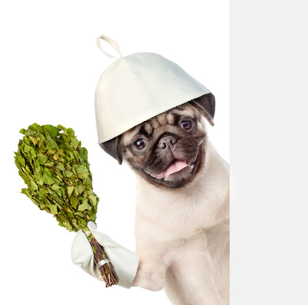 finnish bath: Dog in the hat of bath holding a birch broom. isolated on white background.