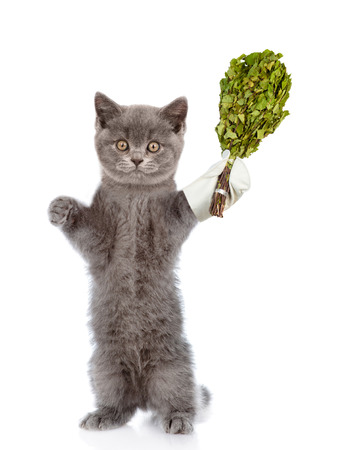 finnish bath: Funny cat holding a birch broom. isolated on white background.