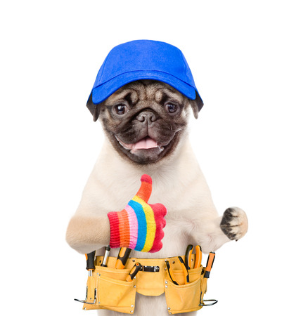 Funny dog with toolbelt showing thumbs up. Isolated on white background. Stock Photo