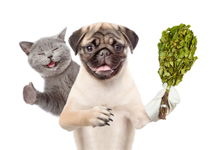 cat grooming: Cat showing thumbs up and Dog holding a birch broom. isolated on white background.