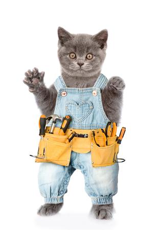 Trabajador divertido del gato con el toolbelt. Aislados en fondo blanco.