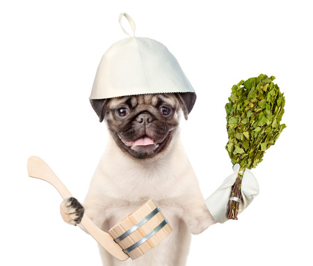 finnish bath: Dog in the hat for a bath holding birch broom and ladle. isolated on white background.