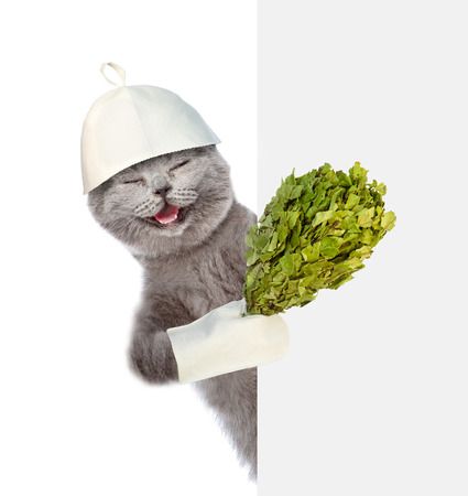 finnish bath: Peeping Cat in the hat of bath holding a birch broom. isolated on white background.