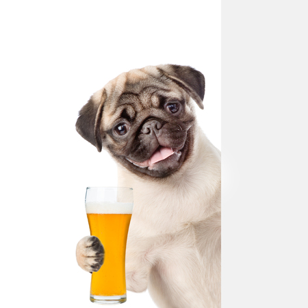 Dog with light beer peeking above white banner. isolated on white background. 版權商用圖片