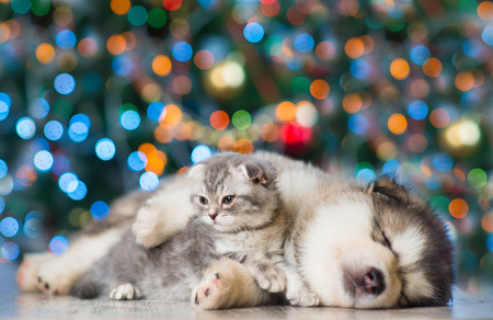 Kitten and puppy on a background of the Christmas tree.