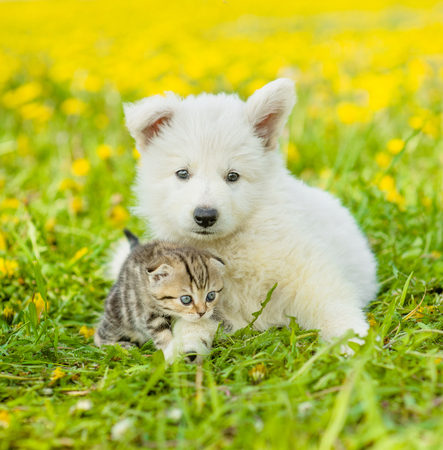 Cat and dog lying together on a dandelion field
