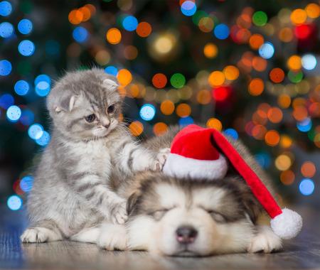gatito juguetón y perrito soñoliento en un fondo del árbol de Navidad. Foto de archivo