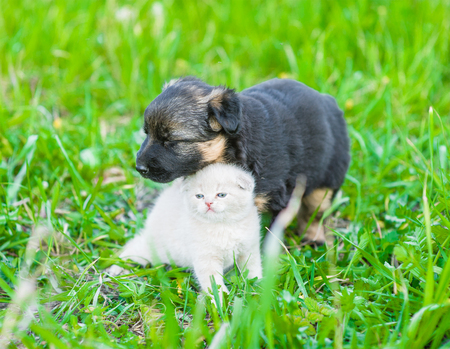 German shepherd puppy and tiny kitten together on green grass. Stock Photo