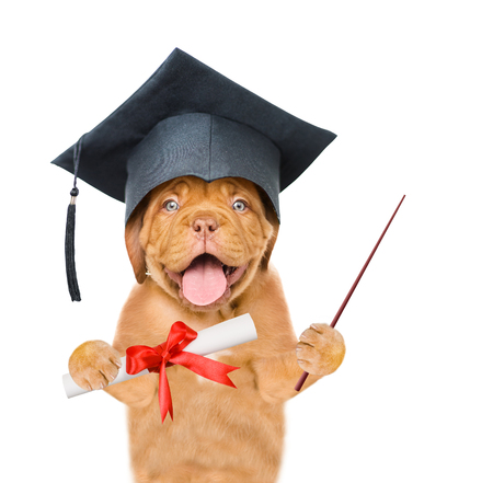Graduated dog holds a diploma in his paws and pointing stick. isolated on white background.