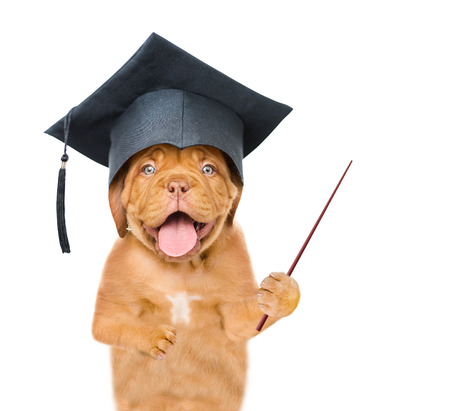 Graduated dog with pointing stick. isolated on white background.