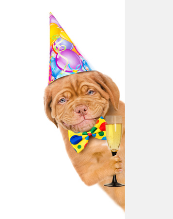 Happy puppy in birthday hat holding glass of champagne and peeking from behind empty board. isolated on white background.