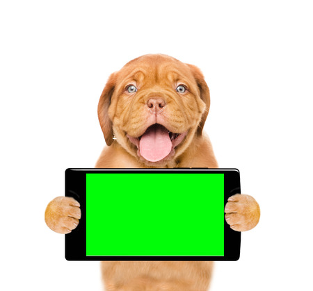 Funny puppy with smartphone. Isolated on white background. Stock Photo