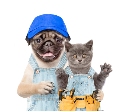 Dog worker with hat and kitten with tool belt. Isolated on white background. Stock Photo