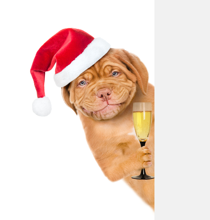 Happy dog in red christmas hat holding glass of champagne and peeking from behind empty board. isolated on white background. Stock Photo
