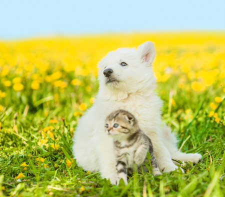 Puppy hugging a kitten on a field of dandelions and looking away.