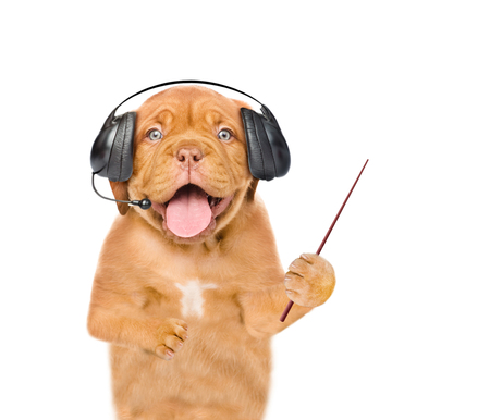 Puppy support phone operator in headset with pointing stick. isolated on white background.