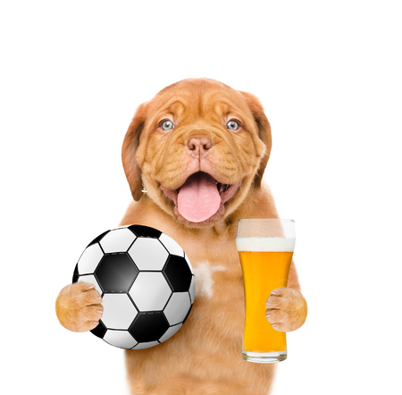 8ee5d0e8179 Funny puppy holding a soccer ball and light beer. Isolated on white  background.